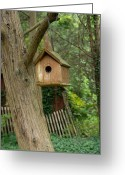 Squirrel Photographs Greeting Cards - Birdhouse 208 Greeting Card by Joyce StJames