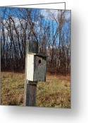 Log Cabin Photographs Photo Greeting Cards - Birdhouse On A Pole Greeting Card by Robert Margetts