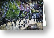 Sanctuary Greeting Cards - Birds at Cape St. Marys Bird Sanctuary in Newfoundland Greeting Card by Elena Elisseeva