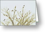 Bare Tree Greeting Cards - Birds Greeting Card by E Murray