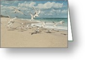 Melbourne Beach Greeting Cards - Birds In Flight Greeting Card by Cheryl Davis