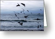 Beaches Greeting Cards - Birds In Flight Greeting Card by Deborah  Crew-Johnson