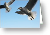 Ambition Greeting Cards - Birds in motion. Greeting Card by Giancarlo Sherman