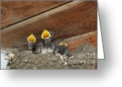 Byzantine Icon Greeting Cards - Birds in nest Picture Greeting Card by Preda Bianca