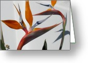Bird Of Paradise Greeting Cards - Birds in Paradise Greeting Card by Richard Mansfield