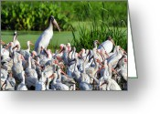 Audubon Greeting Cards - Birds of a Feather Greeting Card by Al Powell Photography USA