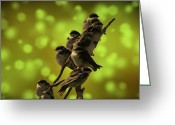 David Dehner Greeting Cards - Birds of A Feather Greeting Card by David Dehner