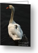 Motherhood Greeting Cards - Birds Of A Feather Stick Together Greeting Card by Bob Christopher