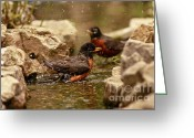 Wildlife Sculpture Greeting Cards - Birds of a Feather Swim Together Greeting Card by Inspired Nature Photography By Shelley Myke
