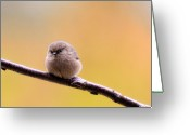 Passerines Greeting Cards - Birds of BC - Bushtit - Psaltriparus minimus Greeting Card by Paul W Sharpe Aka Wizard of Wonders