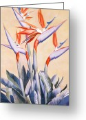 Vertical Painting Greeting Cards - Birds of Paradise Greeting Card by Mary Helmreich