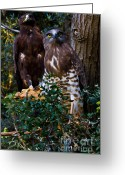 Buzzard Wings Greeting Cards - Birds of Prey Greeting Card by Nadya Ost