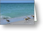 Boca Grande Prints Greeting Cards - Birds on Beach Landscape wide Greeting Card by Geralyn Palmer