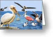 Roseate Spoonbill Greeting Cards - Birds with strange beaks Greeting Card by R B Davis