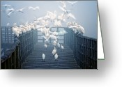 Flock Greeting Cards - Birds Greeting Card by Zu Sanchez Photography