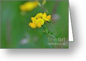Framed Art Pyrography Greeting Cards - Birdsfoot Trefoil Greeting Card by Whispering Feather Gallery