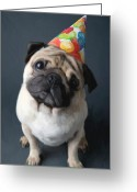 Dog Portrait Digital Art Greeting Cards - Birthday Boy Greeting Card by Snake Jagger
