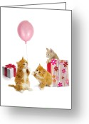 Kitten Greeting Card Greeting Cards - Birthday Kitties Greeting Card by Bob Nolin