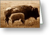 Open Range Greeting Cards - Bison and calf Greeting Card by David Lee Thompson
