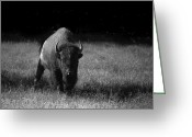 Kaiser Greeting Cards - Bison Greeting Card by Ralf Kaiser