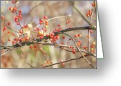 Bittersweet Photo Greeting Cards - Bittersweet and Oak Greeting Card by Michael Peychich