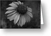 Bittersweet Greeting Cards - Bittersweet Memories - BW Greeting Card by David Dehner