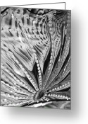 Black Glass Art Greeting Cards - Black - White Greeting Card by Jan Canavan