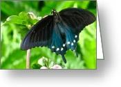 Butterflies And Blue Flowers Greeting Cards - Black And Blue Greeting Card by Debra     Vatalaro