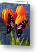 Tulip Greeting Cards - Black and Pink Butterfly Greeting Card by Garry Gay