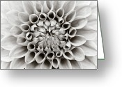 Black And White Flower Greeting Cards - Black And White Dalhia Greeting Card by Photo by Dean Forbes