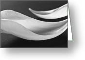 Fineart Canvas          Greeting Cards - Black and White Flower Abstract  2 - Macro Flowers Fine Art Photography Greeting Card by Artecco Fine Art Photography - Photograph by Nadja Drieling