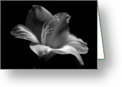 Black Artwork Greeting Cards - Black and White Lily Greeting Card by Artecco Fine Art Photography - Photograph by Nadja Drieling