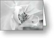 Flower Cards Greeting Cards - Black and White Phaeleonopsis Orchid Photography Greeting Card by Jayne Logan
