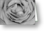 Gabor Pozsgai Greeting Cards - Black and white rose Greeting Card by Gabor Pozsgai
