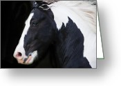 Stallion Greeting Cards - Black and White Study Greeting Card by Terry Kirkland Cook