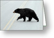 Hibernation Greeting Cards - Black Bear Crossing the road  Greeting Card by Pierre Leclerc