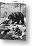 Black Bear Cubs Greeting Cards - Black Bear Mother And Her Cubs Raid Greeting Card by Walter A. Weber