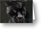 Panther Greeting Cards - Black Beauty Greeting Card by Vic Weiford