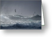 Oceans And Seas Greeting Cards - Black-browed Albatrosses Flying Greeting Card by Frans Lanting