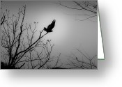 Forbidding Greeting Cards - Black Buzzard 1 Greeting Card by Teresa Mucha