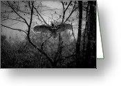 Buzzard Wings Greeting Cards - Black Buzzard 3 Greeting Card by Teresa Mucha