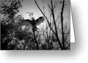 Buzzard Wings Greeting Cards - Black Buzzard 4 Greeting Card by Teresa Mucha
