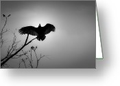 Buzzard Wings Greeting Cards - Black Buzzard 5 Greeting Card by Teresa Mucha