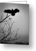Buzzard Wings Greeting Cards - Black Buzzard 6 Greeting Card by Teresa Mucha