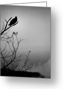 Forbidding Greeting Cards - Black Buzzard 7 Greeting Card by Teresa Mucha
