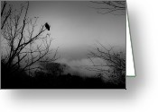 Forbidding Greeting Cards - Black Buzzard 9 Greeting Card by Teresa Mucha