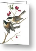 Lithograph Greeting Cards - Black-capped Chickadee Greeting Card by John James Audubon