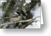 Woodlands Greeting Cards - Black-capped Chickadee Greeting Card by Reflective Moments  Photography and Digital Art Images