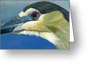 Jon Ferrentino Greeting Cards - Black Capped Night Heron Greeting Card by Jon Ferrentino