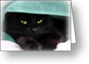 Moody Greeting Cards - Black Cat Secrets Greeting Card by Bob Orsillo